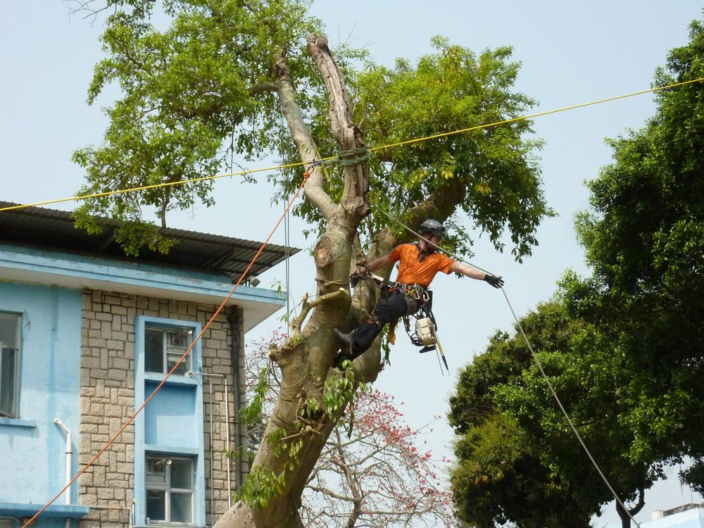 Contract Arborist And Training Arboriculture International Tree