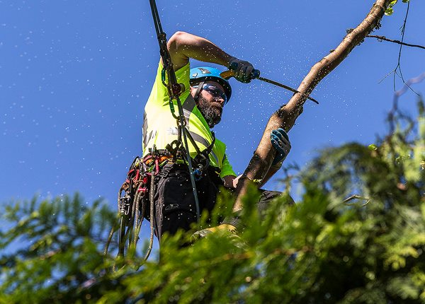 Arboriculture International adheres to ANSI A300 (Part 1) Pruning Standard and ANSI z133.1 Safety Standards, the guidelines recognised by the International Society of Arboriculture (ISA) and the Tree Care Industry Association (TCIA).