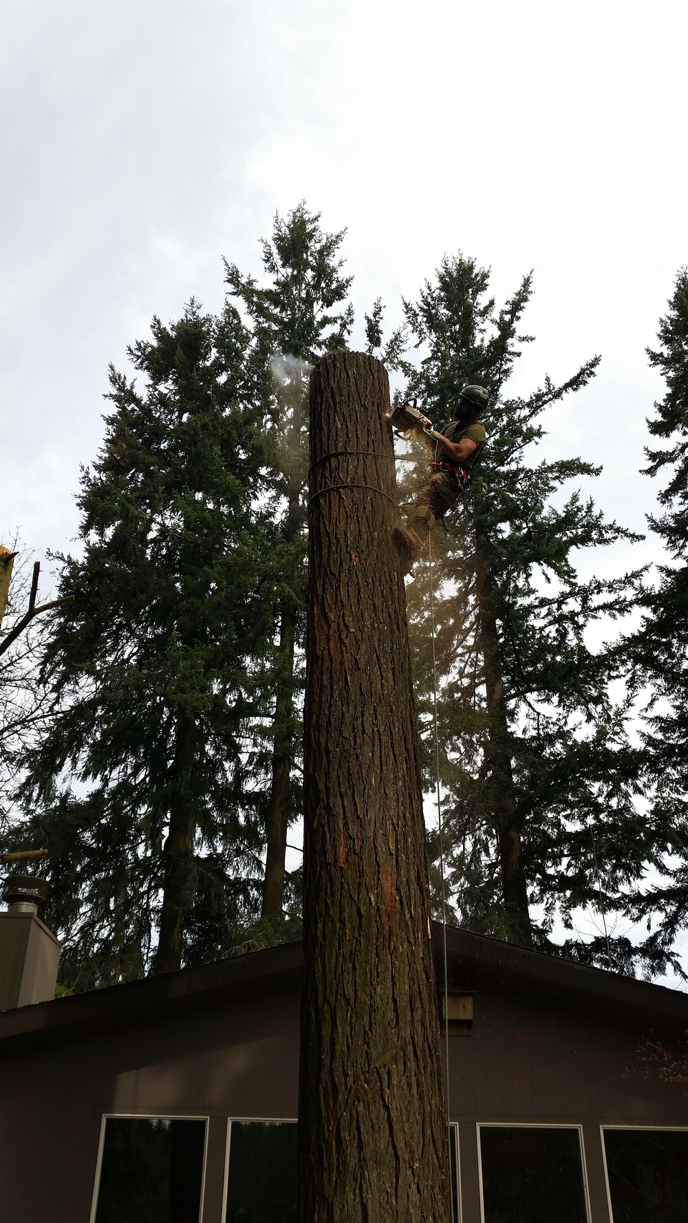 Arboriculture International adheres to ANSI z133.1 Safety Standards, the guidelines recognised by the International Society of Arboriculture (ISA) and the Tree Care Industry Association (TCIA).