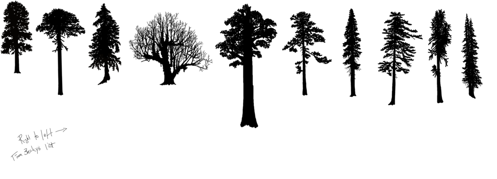 hoyt trees conifer.png