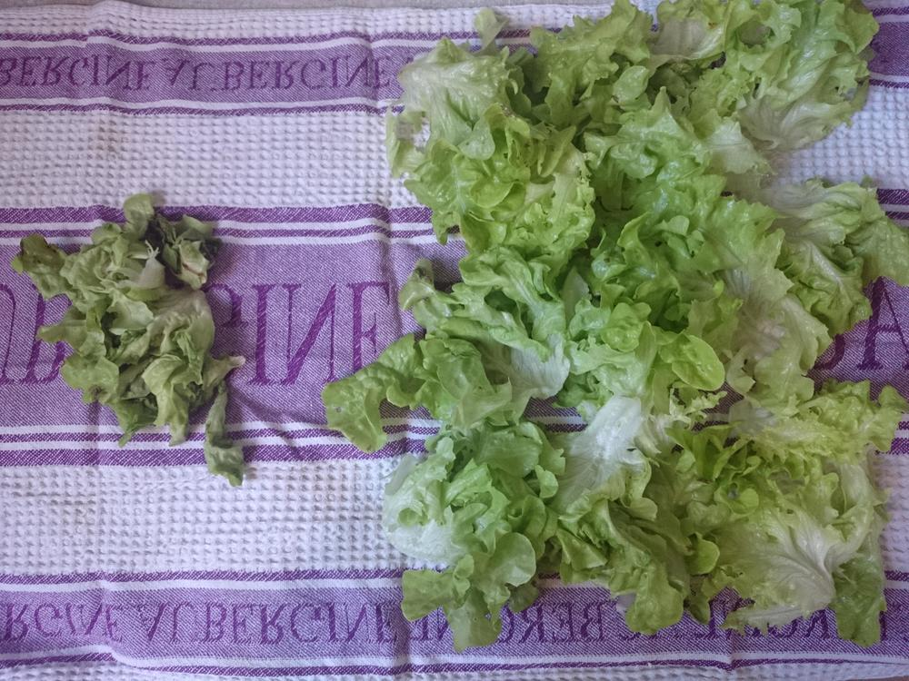 Most of the lettuce is completely revived. I've just lost those few bits of leaf on the left.