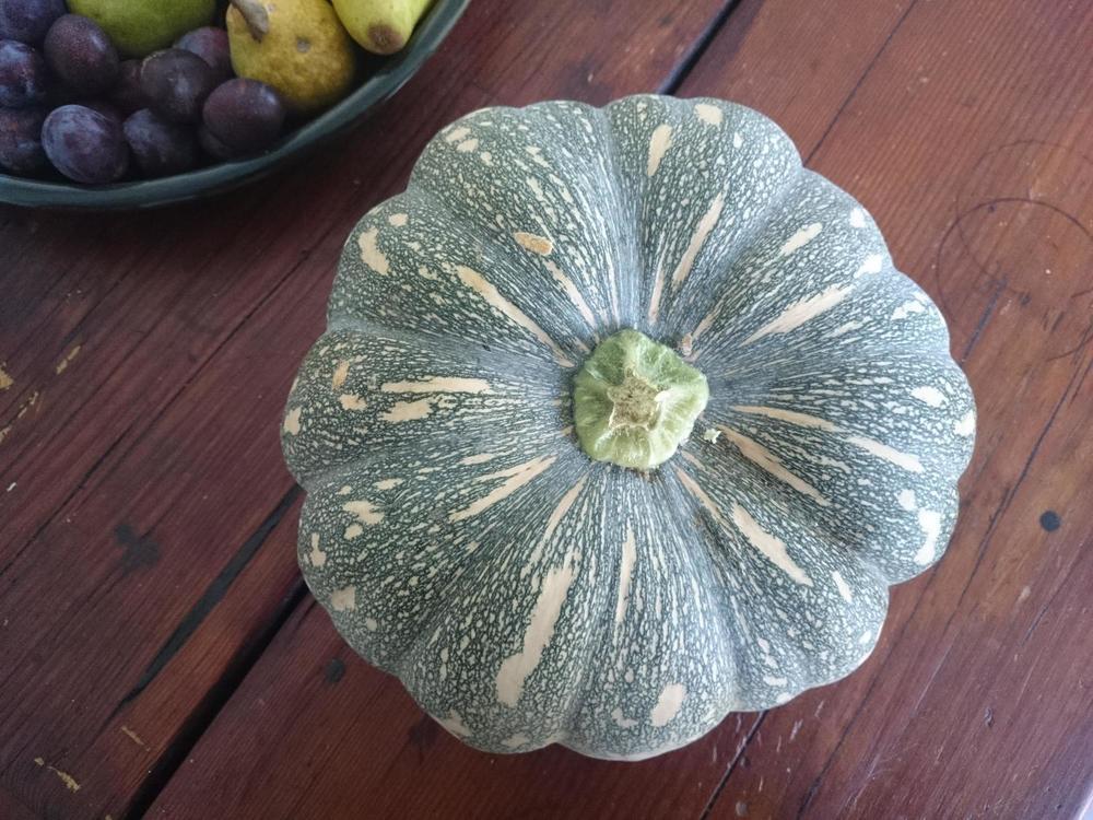 FeralPumpkin.jpg