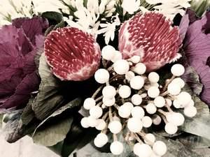 Protea, brunia