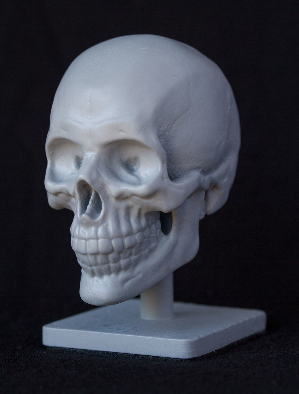 Skull_Beauty_Persp.jpg