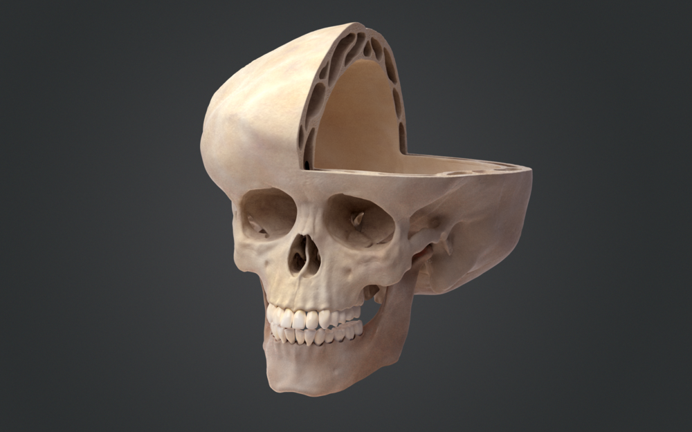 01_Output_Skull (00000).png