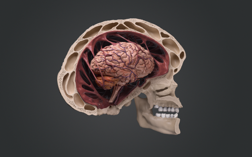 02_Output_Brain (00000).png