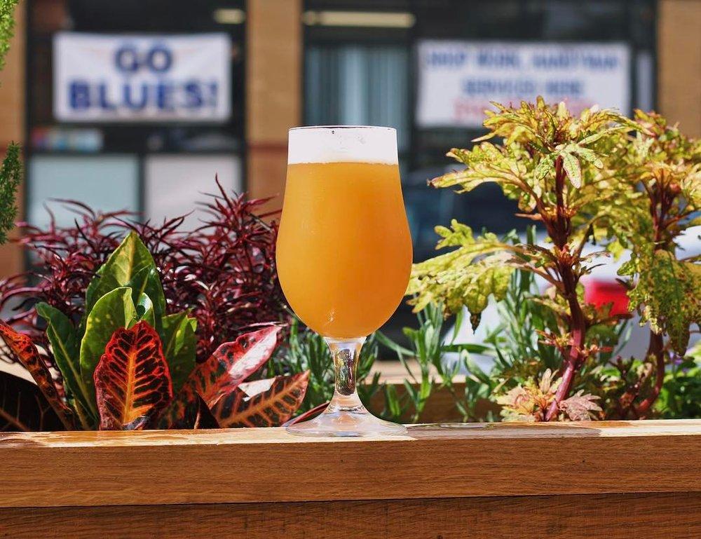 webs beer plants.jpg