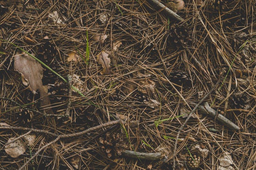 dirt-environment-ground-698489.jpg