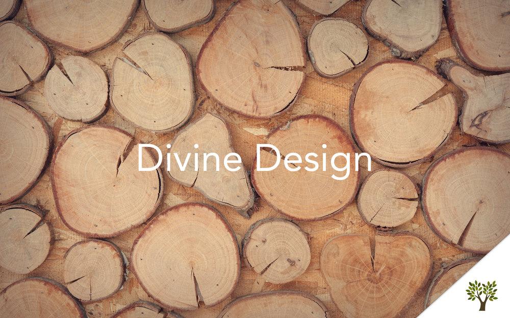Divine Design Terry Fant