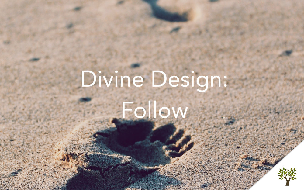 Divine Design: Follow  Terry Fant