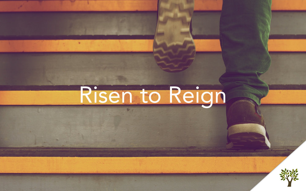 Risen to Reign  Terry Fant