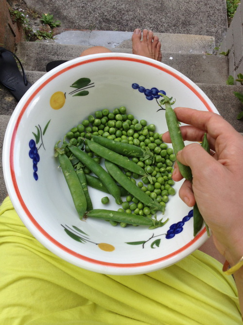 Shelling peas... Italian food tours and recipes
