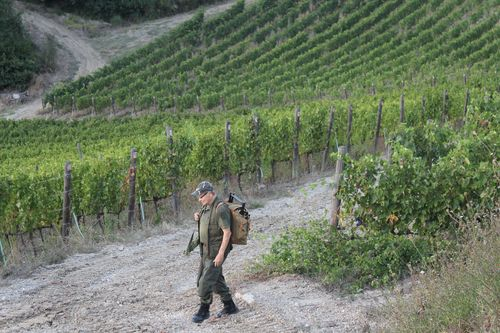 Visit farm in Vigliano outside of Florence on our Italian food and wine tour