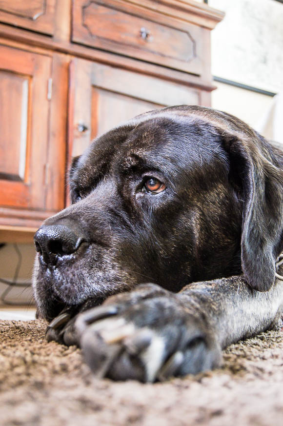 Rufus 2.jpg