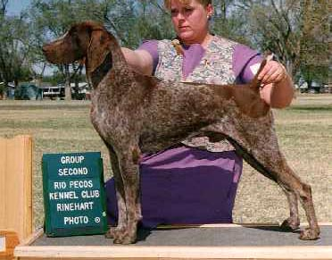 "Ch. Up N Adam's Captain Marvel, CDX, JH ""Captain"""