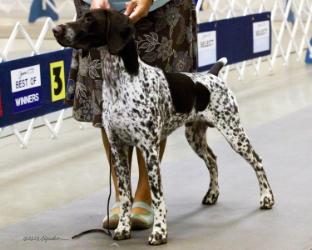 Puppy dog class in Amarillo