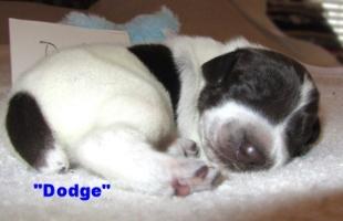 Dodge iii.JPG