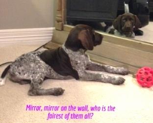Scout-MirrorMirror.jpg