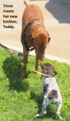 Tessa-Teddy.jpg