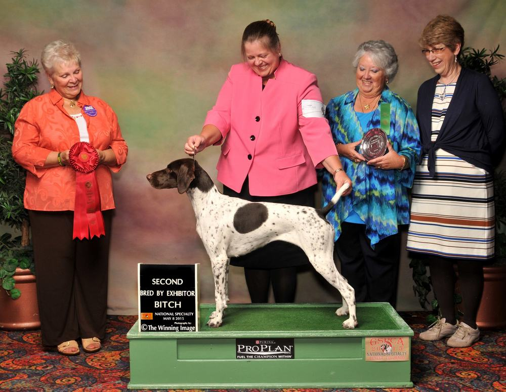2015 GSPCA National Specialty - Bred-By-Exhibitor 2nd Place