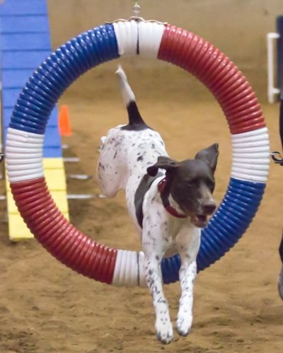 Joy-Jump-Hoop-web.jpg