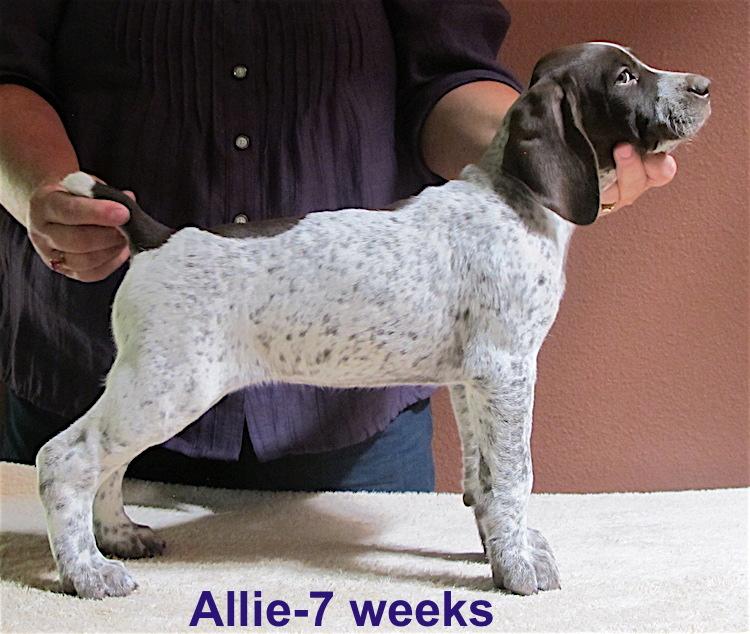 Allie-7weeks.jpg