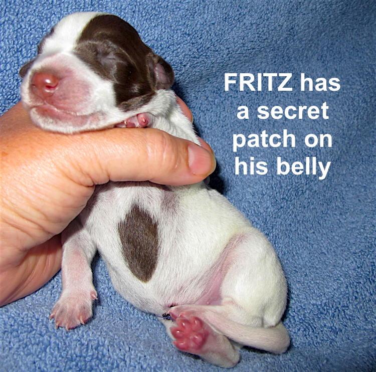 Fritz-belly-1day.jpg