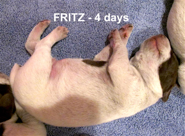 Fritz-4days.jpg