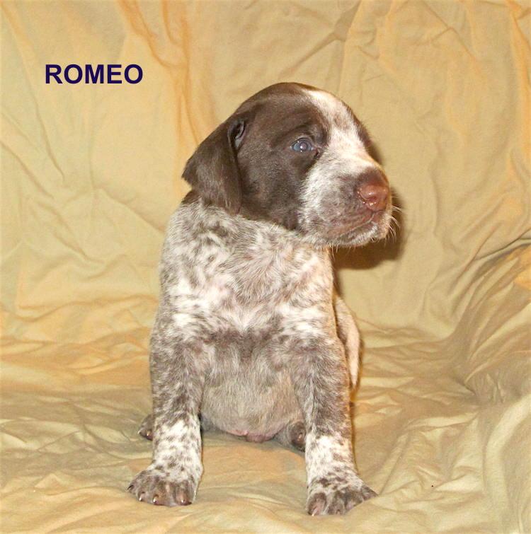 Romeo2-3weeks.jpg