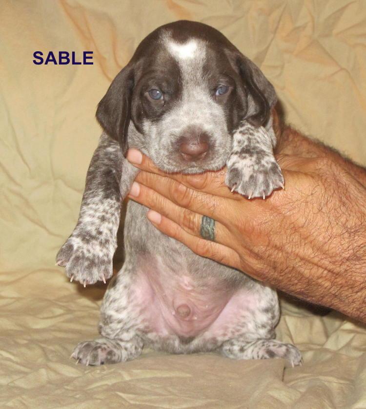 Sable-3weeks.jpg