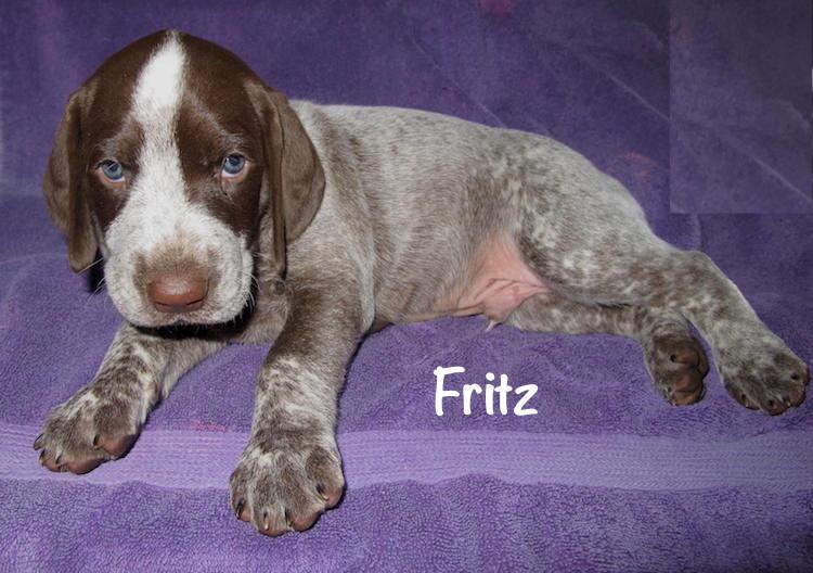 Fritz-5weeks.jpg