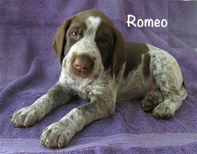 Romeo-5weeks.jpg
