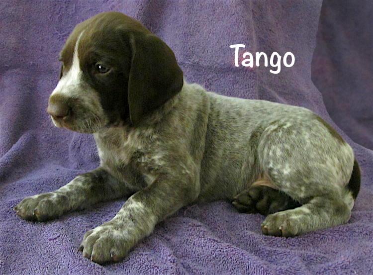 Tango-5weeks.jpg