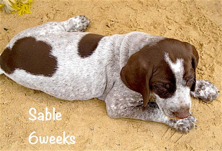 Sable-outside-6weeks.jpg