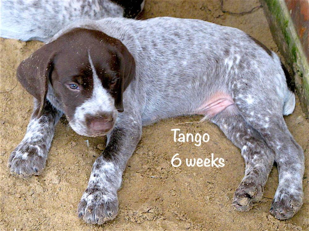 Tango-outside-6weeks.jpg