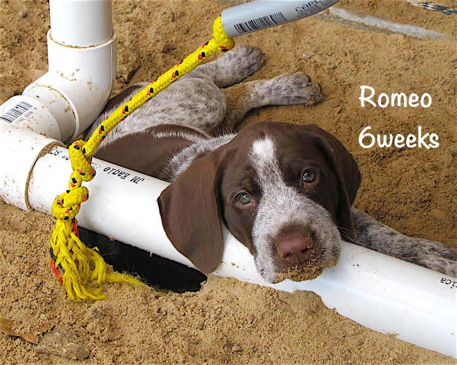 Romeo-face-6weeks.jpg