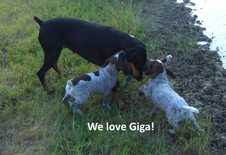 We-love-Giga.jpg