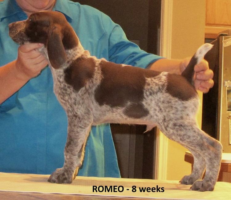 Romeo-side2-8weeks.jpg