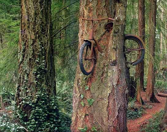 Tree eats bike
