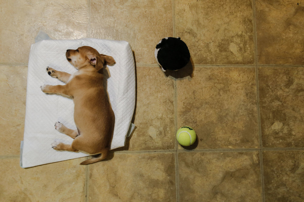 Biggie, who was around two months old at the time, laying on the floor during her first week home.