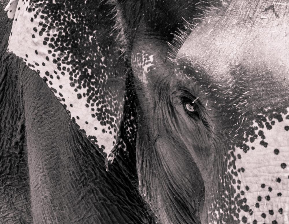 ElephantsEye.jpg
