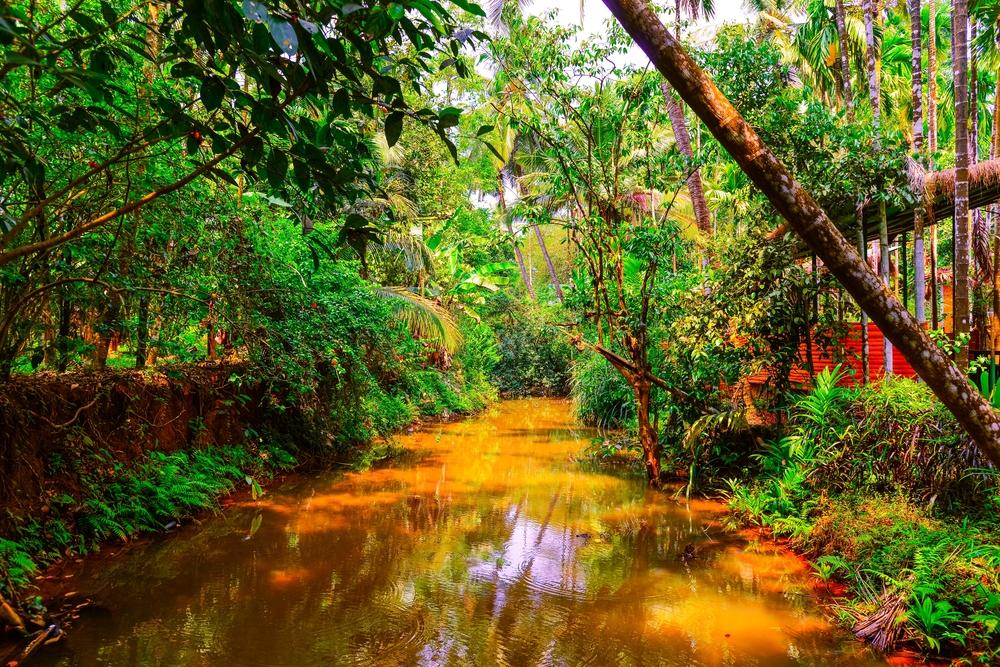 Indian Jungle (small).jpg