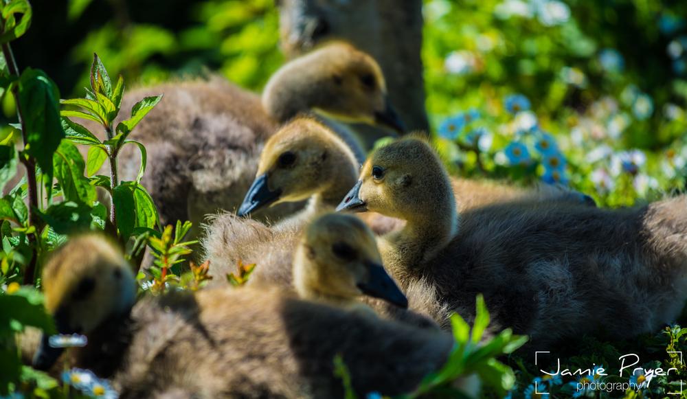 SpringBirds.jpg