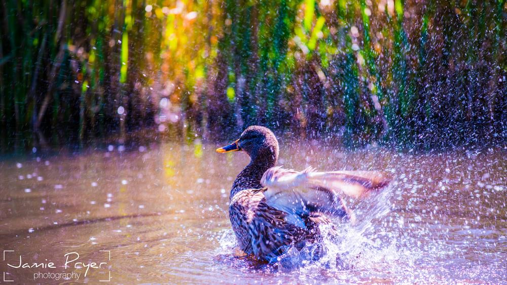 Splashing Around.jpg