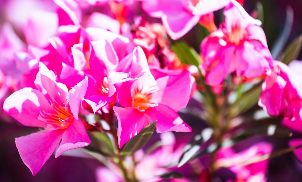 Ibiza Flowers.jpg