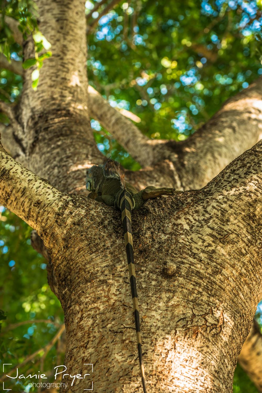 Tree Lizard.jpg