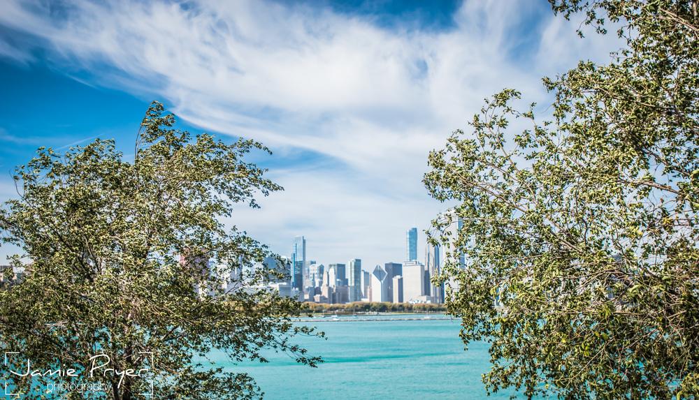 City Between Trees.jpg