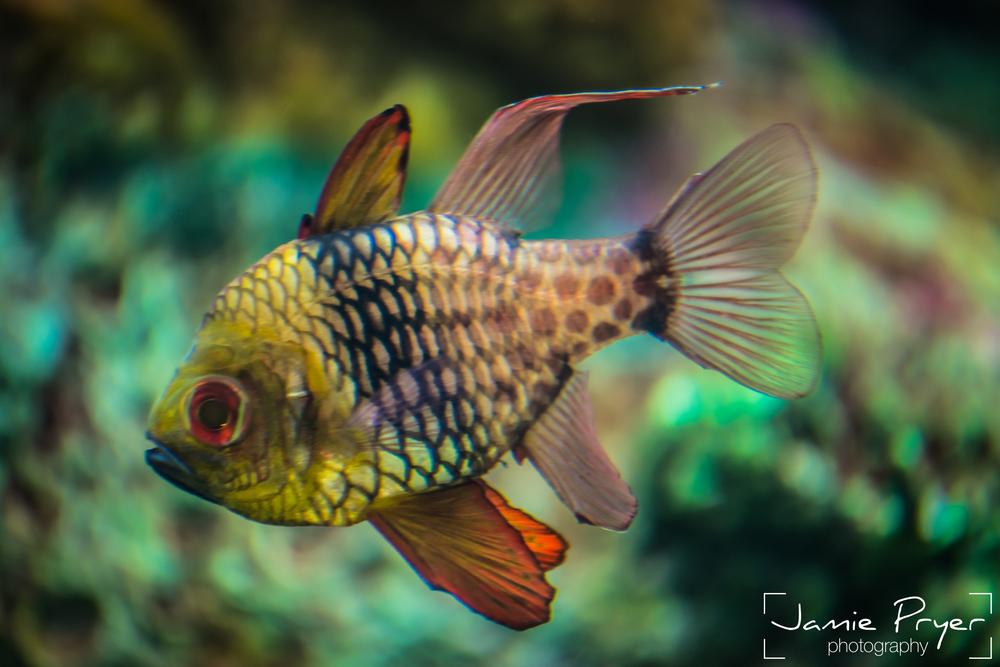 A lonley fish-2.jpg
