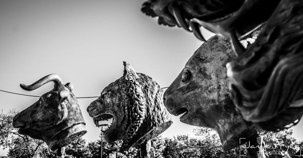 Chicago Animals-2.jpg