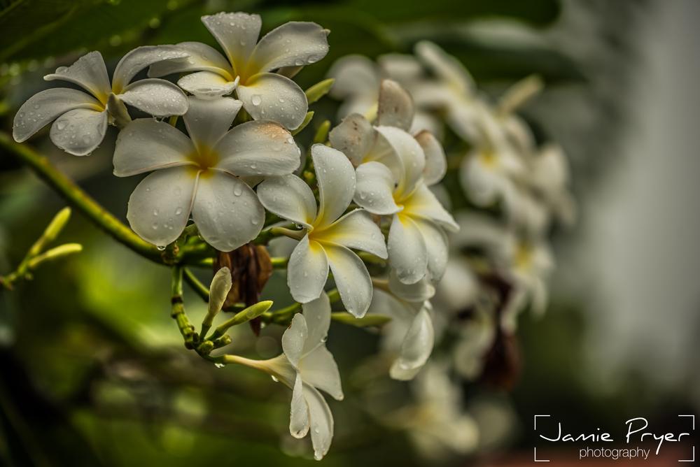 Wet Flowers-2.jpg